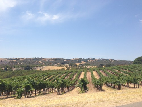 Écluse Winery, Paso Robles